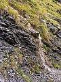 Bergtocht van Tschiertschen (1350 meter) via Ruchtobel richting Ochsenalp 12.jpg
