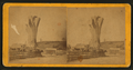 Big Oak at Big Oak Flat, California, from Robert N. Dennis collection of stereoscopic views.png