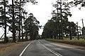 Bilpin NSW 2758, Australia - panoramio (17).jpg