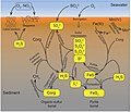 Biogeochemical sulfur cycle of marine sediments.jpg