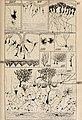 Biologisches Zentralblatt (1897) (20193522248).jpg