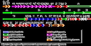 Rifamycin - Image: Biosyn genes 1