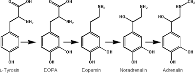 Biosynthese Adrenalin.png