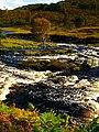 Birch - panoramio (2).jpg