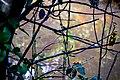 Bird, Millennium park Abuja.jpg