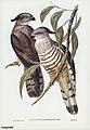 Bird illustration by Elizabeth Gould for Birds of Australia, digitally enhanced from rawpixel's own facsimile book25.jpg