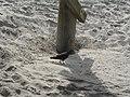 Bird under the Pier - panoramio.jpg