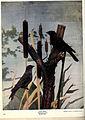 Birds of Buzzard's Roost (Plate XXV) (6279973898).jpg
