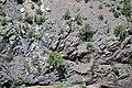 Black Canyon Formation (Paleoproterozoic, 1.759 Ga; Cold Shivers Point, Columbus Canyon, Colorado National Monument, Colorado, USA) 2 (23951569666).jpg