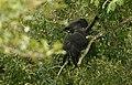 Black eagle 1.jpg