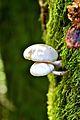 Blanco sobre verde en el bosque gipuzkoano.jpg