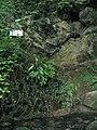 Blocked cave entrance above Llygad Llwchwr - geograph.org.uk - 195918.jpg