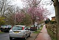 Blossom on King George V Hill - geograph.org.uk - 1226940.jpg