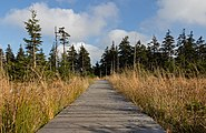 Boardwalk - Jeseniky, Czech Republic 25.jpg