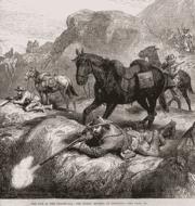 Boers 1881