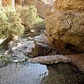 Bokek Stream (9697098216).jpg