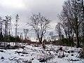 Bonshaw Trail, PEI (7062258995).jpg