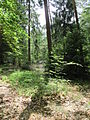 Bos Sallandse Heuvelrug II.JPG