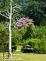Botanic Garden Penang.jpg