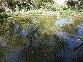 Botanical Garden of Mount ScopusDSCN4676.JPG