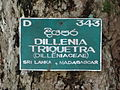 Botanical Garden of Peradeniya 63.JPG