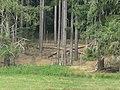 Boutissaint-wild boar wandering-28-08-17.jpg