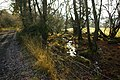 Bridleway and stream - geograph.org.uk - 1064181.jpg