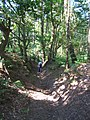 Bridleway in Blackheath Forest near Albury - geograph.org.uk - 188429.jpg