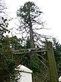 Bridleway towards Finlake - geograph.org.uk - 728633.jpg