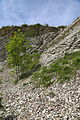 Brochterbeck Naturschutzgebiet Osterklee Kalksteinbruch 08.JPG