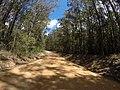 Brooman NSW 2538, Australia - panoramio (112).jpg