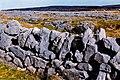 Burren - Wall along R477 southwest of Black Head - geograph.org.uk - 1632189.jpg