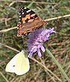 Butterflies - geograph.org.uk - 1460230.jpg