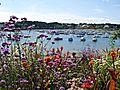 Côte de granit rose, Bretagne.jpg
