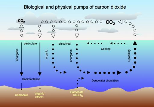 CO2 pump hg