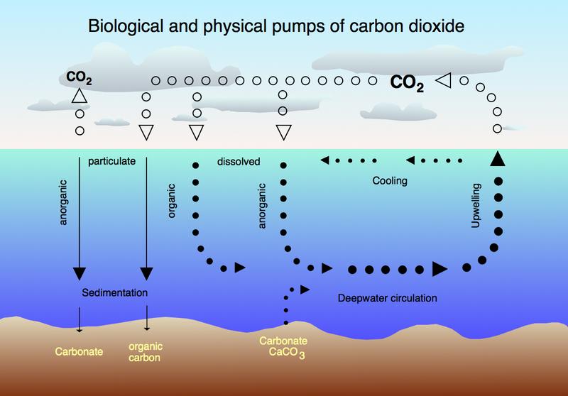File:CO2 pump hg.png