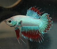 CTPK Multi M - Betta-Online.jpg