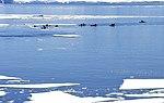 Canoas entre el hielo.jpg