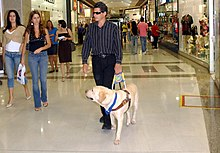 Image Result For Dog Training Obstacles
