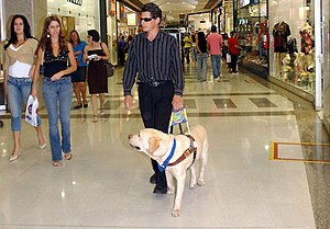 A blind man is led by a guide dog in Brasília,...