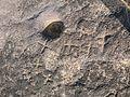 Carved Rock at Maina hill rock..jpg