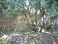 Castell de Miralles 10.jpg