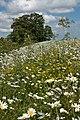 Castle Hill Hospital grounds IMG 9883 - panoramio.jpg