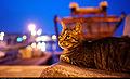 Cat (5889008066).jpg