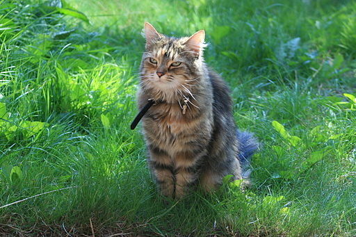 Cat named Millie