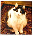 Cat on rug.jpg