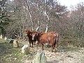 Cattle, Lealt - geograph.org.uk - 760099.jpg