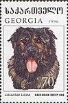 Caucasian-Sheepdog-Canis-lupus-familiaris.jpg