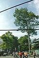 Cay xanh tren duong ly thuong kiet - panoramio.jpg