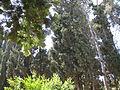 Cemetery of Kibutz Yagur IMG 2924.JPG